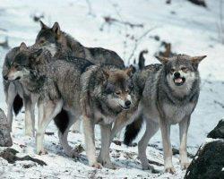 staja-volkov07